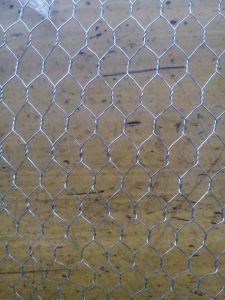 China Supplier of Galvanized Chicken Wire Mesh pictures & photos