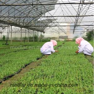 Medlar Health Food Himalayan Goji Berry pictures & photos