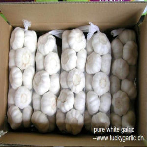2017 New Season China Good Quality Pure White Fresh Garlic pictures & photos
