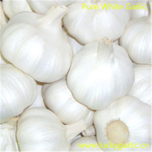China Top Quality Pure White Garlic pictures & photos