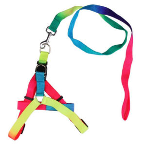 Explosive Paragraph Pet Colorful Harness pictures & photos