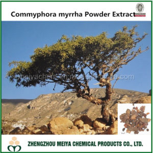 Top Manufacturer Supply Commyphora Myrrha Powder Extract with Bisabolol pictures & photos