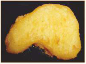 Burger Chicken Nuggets Tempura Battering Machine (dipper) Njj400-V pictures & photos