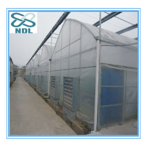 Automatic Agricultural Film Green House pictures & photos