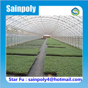 China Supplier Hot Sale Production Tunnel Greenhouse pictures & photos