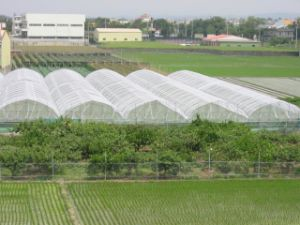 UV Resistance HDPE Virgin Material Anti Insect Netting for Greenhouse and Agricultural Orchard and Farming pictures & photos