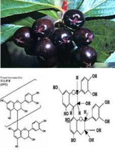 Natural Black Chokeberry Extract Powder Anthocyanin 5%-70% 4: 1, 10: 1 CAS: 18466-51-8 pictures & photos