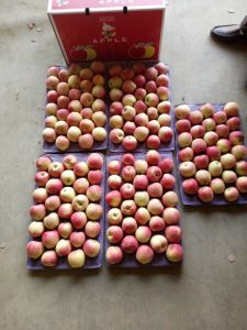 2017 Red Star Apple/Paper Bagged Red Star Apple pictures & photos