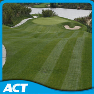 Anti-UV Artificial Golf Putting Green Turf G13 pictures & photos