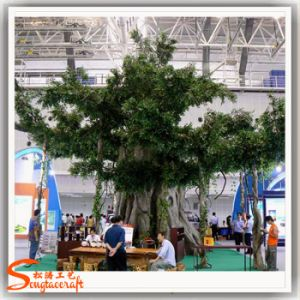 Distinctive Indoor Decoration Evergreen Artificial Ficus pictures & photos