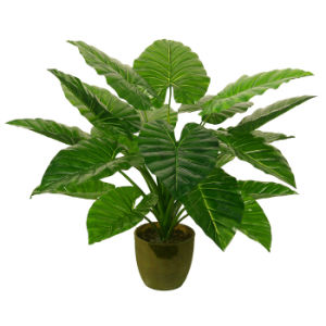 Artificial Plants of 80cm Taro with Green Plastic Pot, 20 Lvs