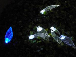 Hummingbird Solar Light String pictures & photos
