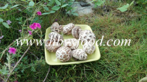 Dried Flower Mushroom, Shiitake Mushroom, Dried Vegetable pictures & photos