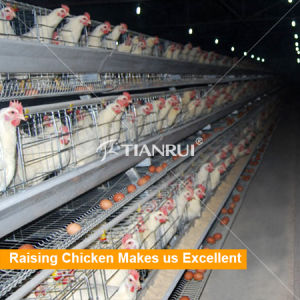 laying hen/layer/egg chicken A type automatic battery chicken cages pictures & photos