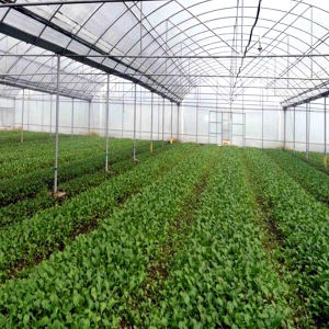 Commercial Aluminum Frame Polycarbonate Sheet Greenhouse for Vegebable pictures & photos