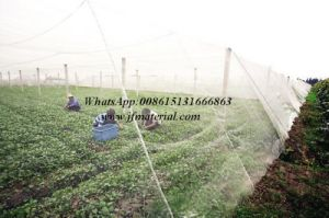 Insect Netting Insect Screen Mesh pictures & photos