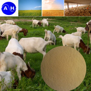 Vegetable Source Amino Acid Powder for Animal Feed pictures & photos