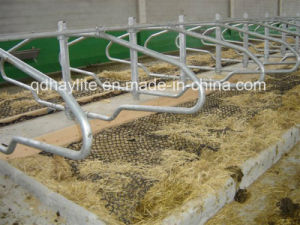 Hot Dipped Galvanised Livestock Equipment Free Stall Cattle Stall pictures & photos