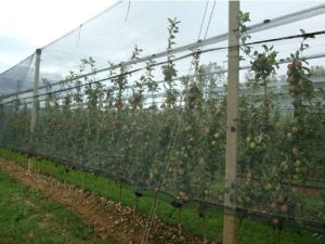 Anti Insect Bird Net for Grape Vines pictures & photos