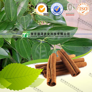 100% Pure Natural Herb Medicine Cortex Cinnamomi pictures & photos