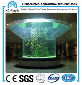 Big Irregular Acrylic Aquarium pictures & photos
