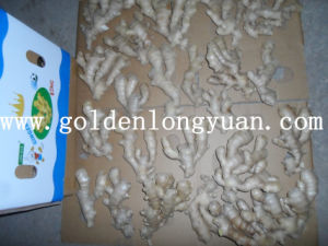 Air Dry Ginger From China pictures & photos