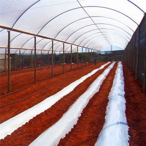 Agriculture Economical Tunnel Green House for Vegetable Growing -Helen pictures & photos