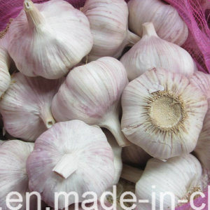 2017 New Crop Fresh Purple Garlic in Carton pictures & photos