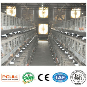 The Chicken Cages System Equipment of Broiler pictures & photos