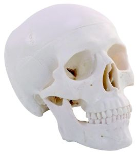 Plastic Mini Skull for Gift pictures & photos