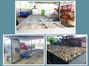 Factory Supply Directly Cassava Chips Dryer/Cassava Chips Drying Machine/Cassava Chips Drying Line