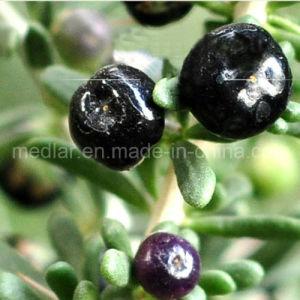 Medlar Sanck Wholesale Black Goji Berry pictures & photos