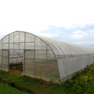 Arch Roof Type Tunnel Greenhouse Backyard Greenhouse Kits pictures & photos