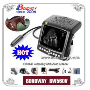 Vet Ultrasound Scanner (BW560V) for Equnie, Bovine, Swine, Canine, Feline Imaging, etc pictures & photos