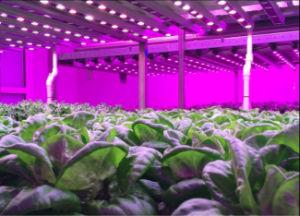AC100~240V High Power LED Grow Light pictures & photos