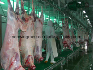 Islamic Halal Type Sheep Slaughter Equipment for Sale