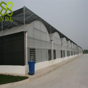 Multi Span Plastic Sheet Agriculture Greenhouse pictures & photos