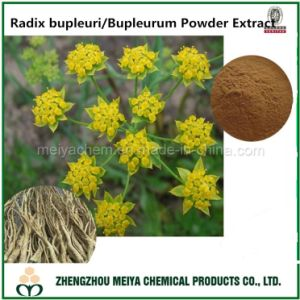 Radix Bupleuri/Bupleurum Saikosaponins Powder Extract for Medicine pictures & photos