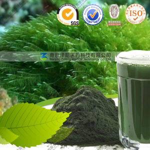 Bulk Wholesale Superfood Losing Weight Use Spirulina Powder pictures & photos
