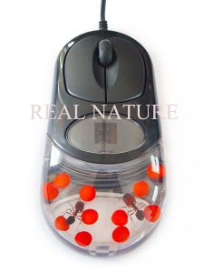 Real Insect Computer Mouse-Ant& Red Bean
