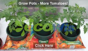 High Quality Tomato Grow Pots China Supplier pictures & photos