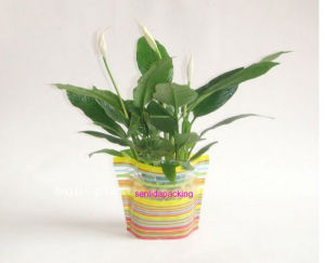 Plastic Foldable Flower Vase pictures & photos