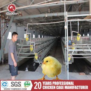 15000 Farm Large Scale Poultry Birds Cage in Zambia /Ghana Farm pictures & photos