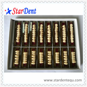 Dental Synthetic Polymer Teeth (4 full sets/box) pictures & photos