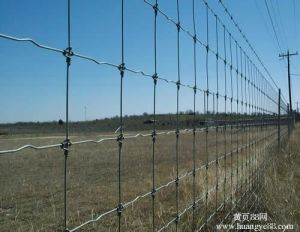High Quality Hinge Joint Knot Field Fence in Good Price pictures & photos