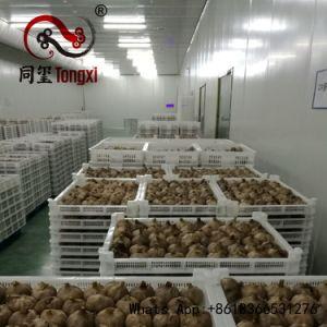Health Benefit Black Garlic for Natural Medicine pictures & photos