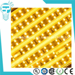 SMD 2835 12V Double Row LED Strip Light pictures & photos