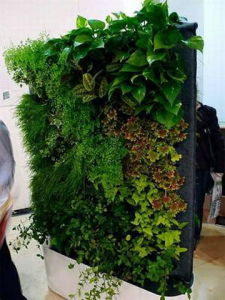 High Quality Artificial Plants and Flowers of Green Wall Gu-Wall00876880017 pictures & photos