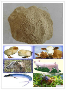 Sell Feed Additives Yeast Powder pictures & photos