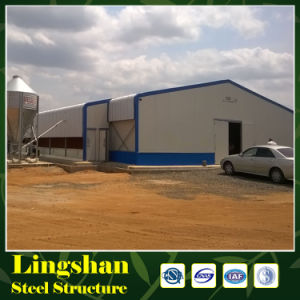 Design Layer Chicken House for Tanzania Poultry Farm pictures & photos